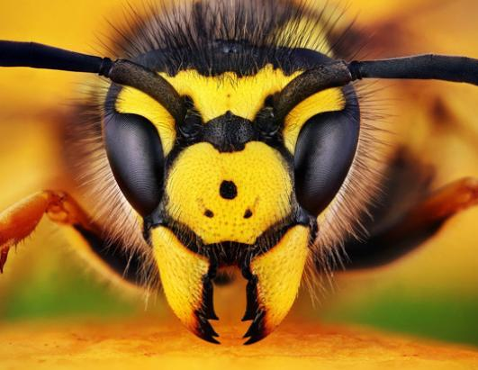 Insect Head shots Picture | Insect Beauty Shots - ABC News