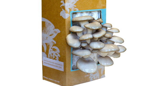 """PHOTO:The """"Back to the Roots"""" mushroom growing kit is shown here."""