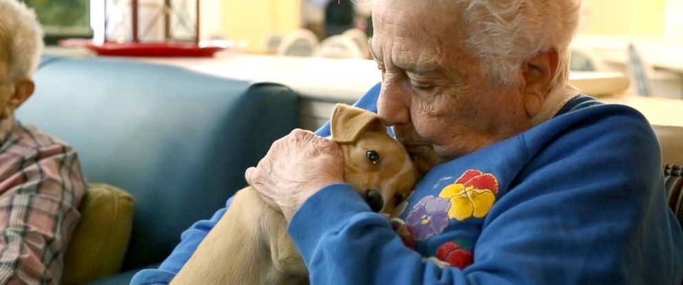 PHOTO: Adoptable puppies from North Shore Animal League America visit seniors at the Oyster Bay Senior Campus to raise the spirits of residents living with dementia and Alzheimers.
