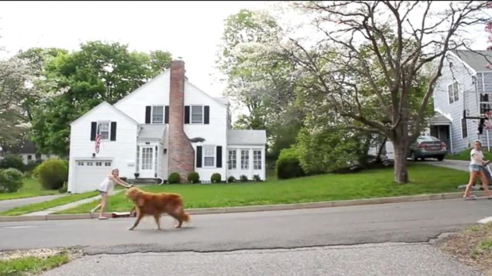 Drone Takes Dog For A Walk