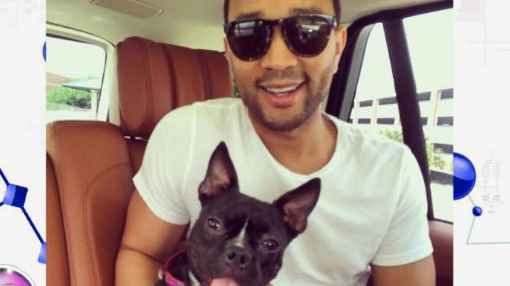 Meet John Legend and Chrissy Teigen's New 3-Legged Puppy Penny