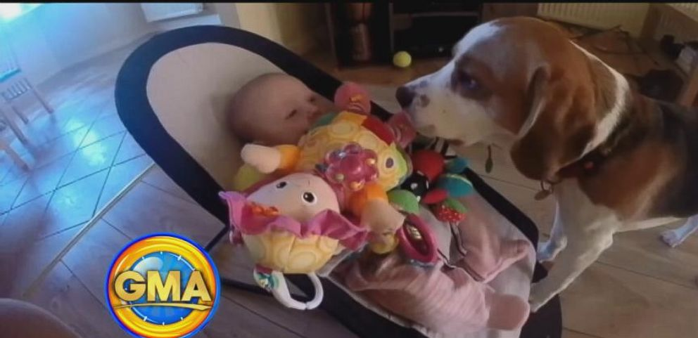 VIDEO: Dog Brings Crying Baby Toys
