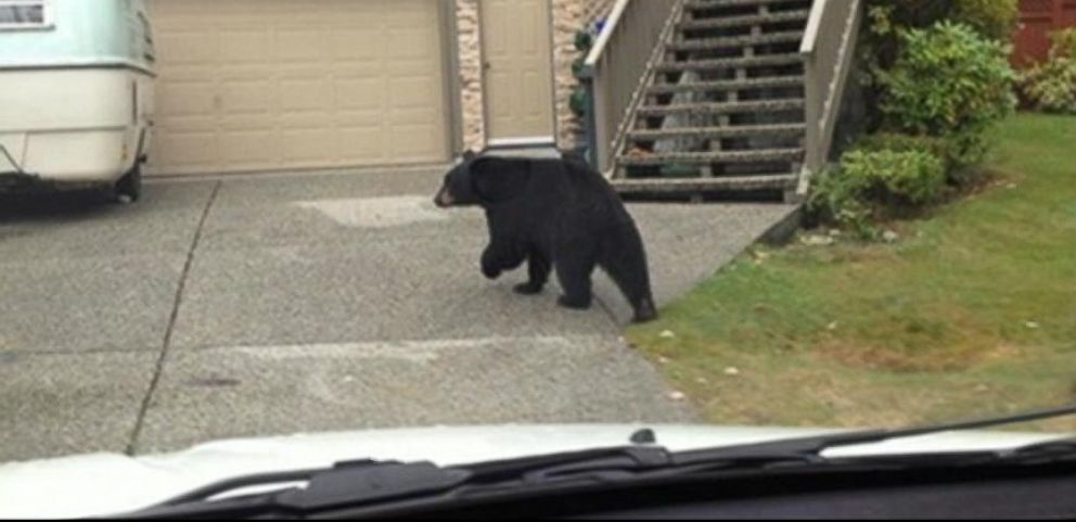VIDEO: Bear Stops Postal Delivery