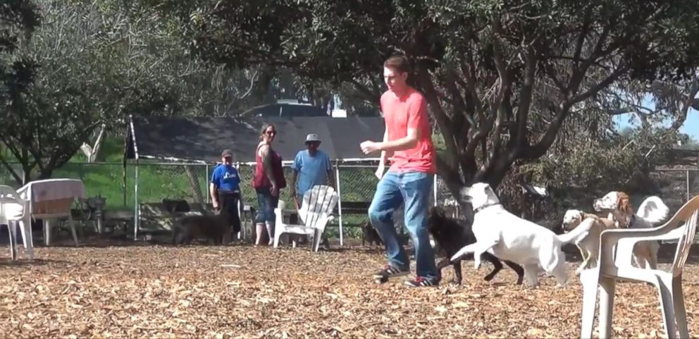 VIDEO: Pranksters Prank Dogs