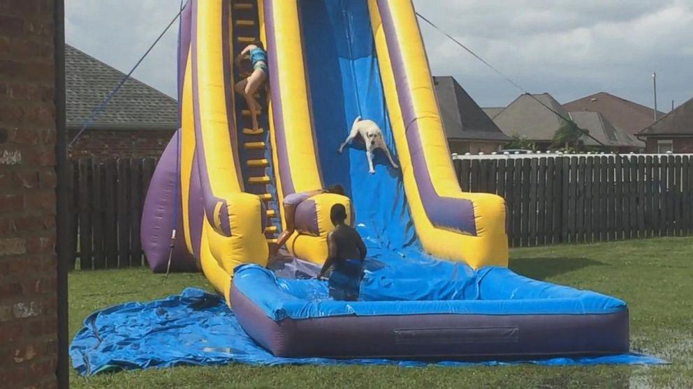 Water Slide In Backyard yellow lab races down giant backyard water slide - abc news