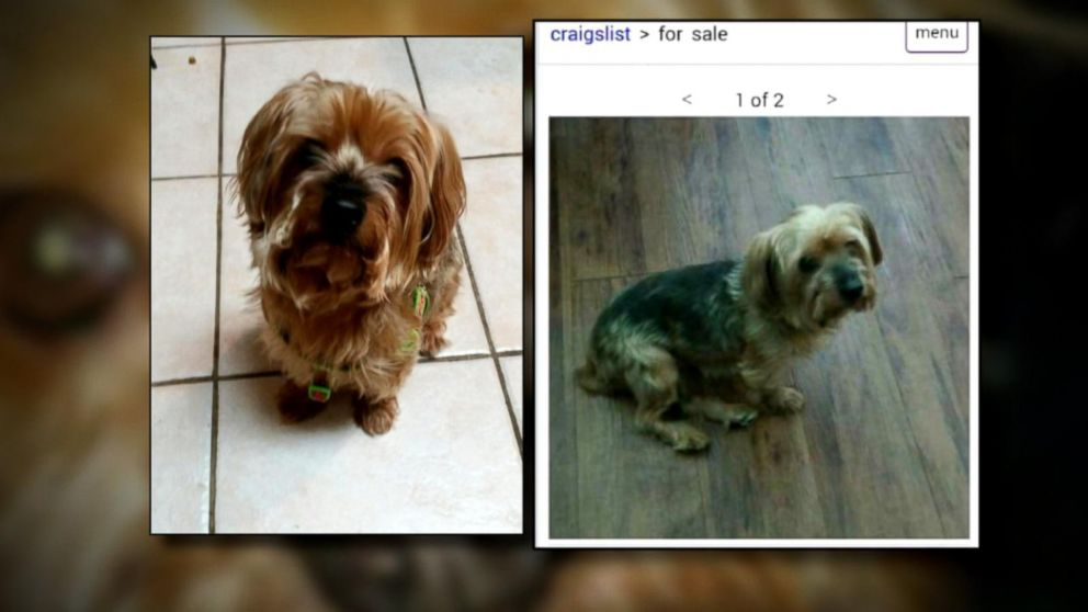 Craigslist Scam Allows Thieves To Get Away With Selling Stolen Dogs