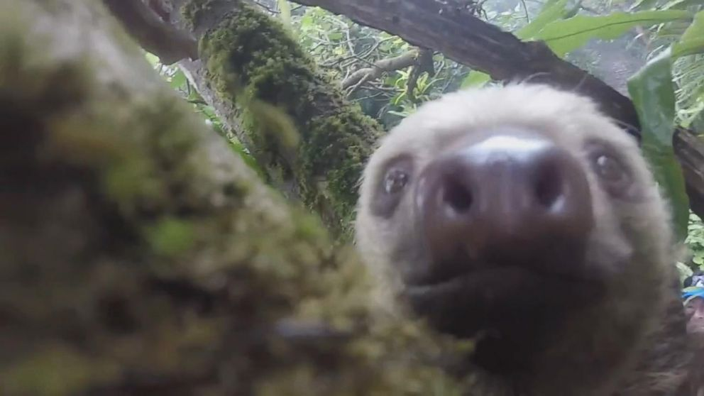 Sloth Rescued From Busy Highway in Ecuador