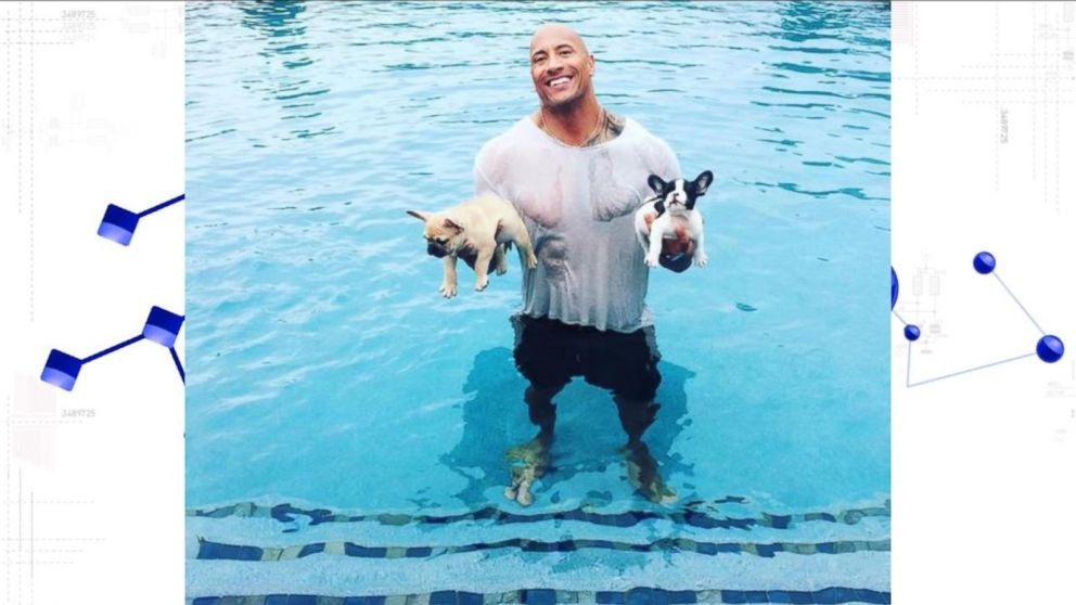Dwayne 'The Rock' Johnson Saves Baby French Bulldogs From