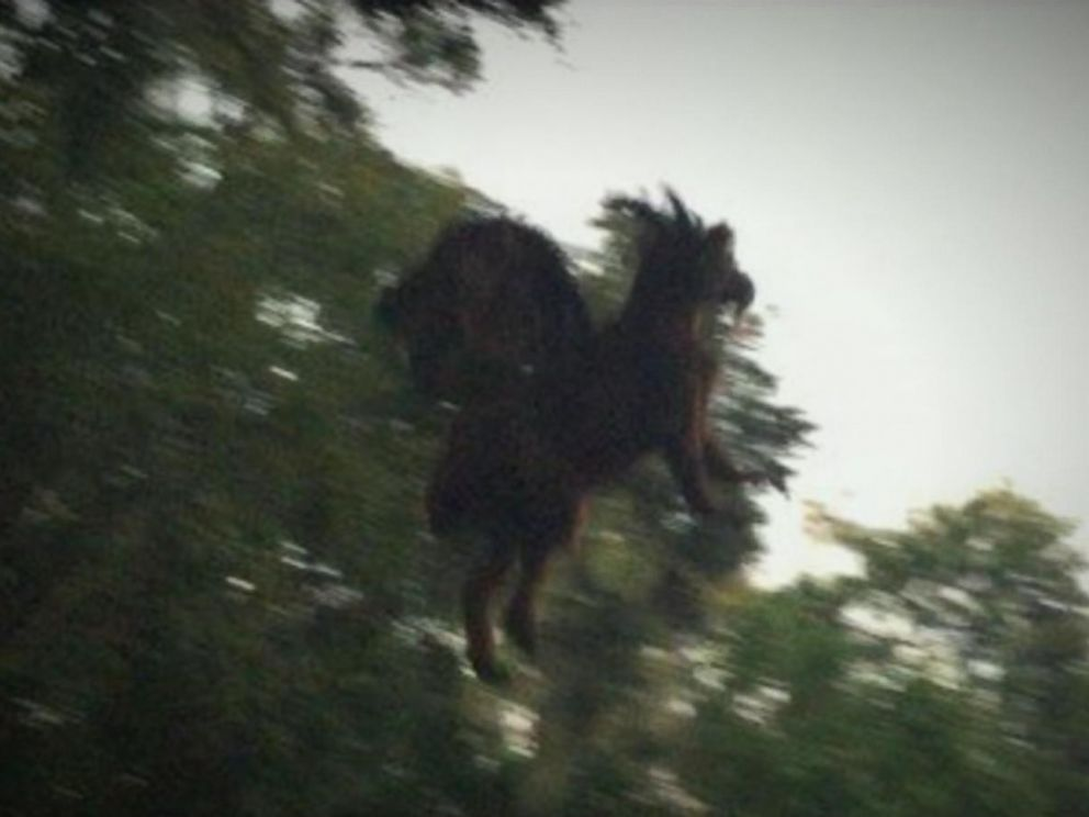 Man Claims to Have Photographed Mythical 'New Jersey Devil' From ...