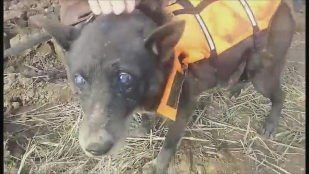 A Dog Named Christmas.Blind Dog Named Christmas Rescued After Being Trapped In A