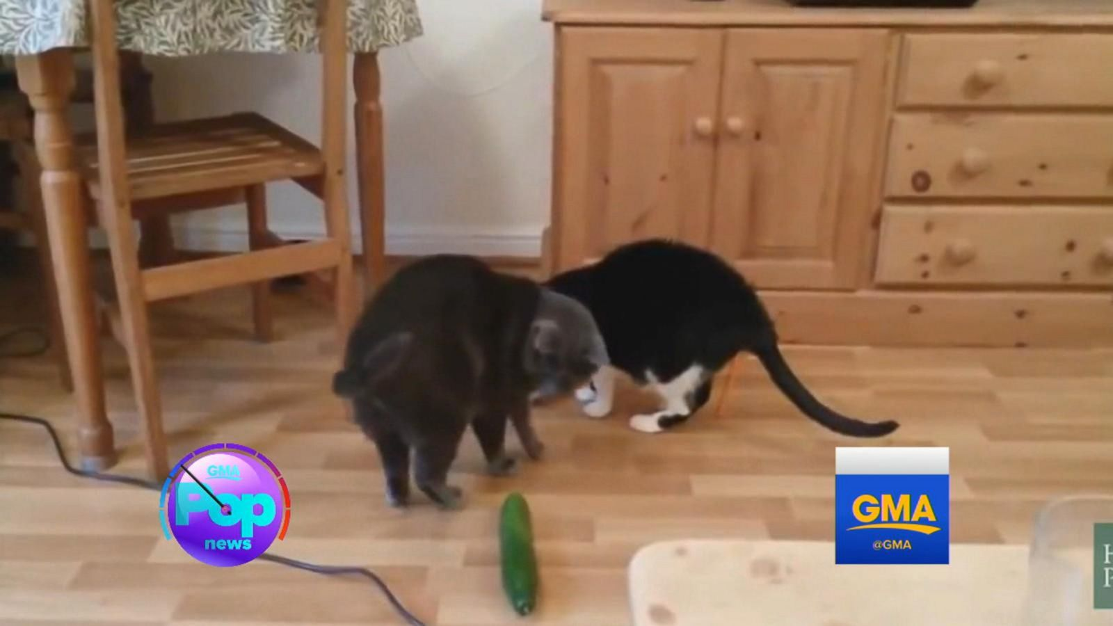 Why These Scaredy Cats Are Absolutely Terrified of Cucumbers - ABC News