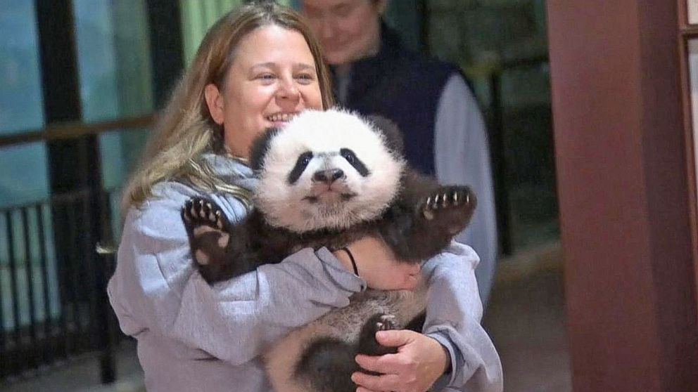 National Zoo's giant panda, Bei Bei, turns 4 but soon headed back to China
