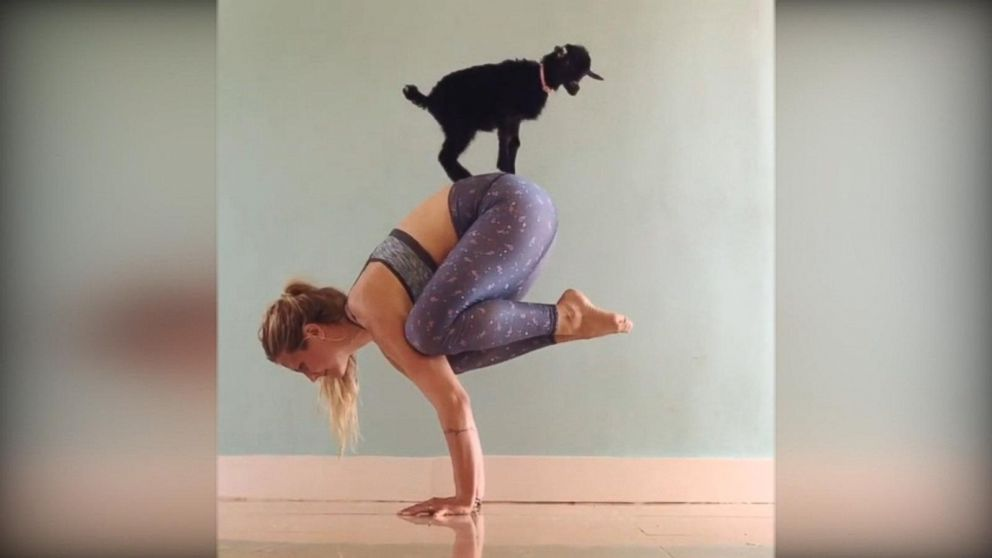Goat Named Penny Lane Is Girl's Greatest Yoga Partner