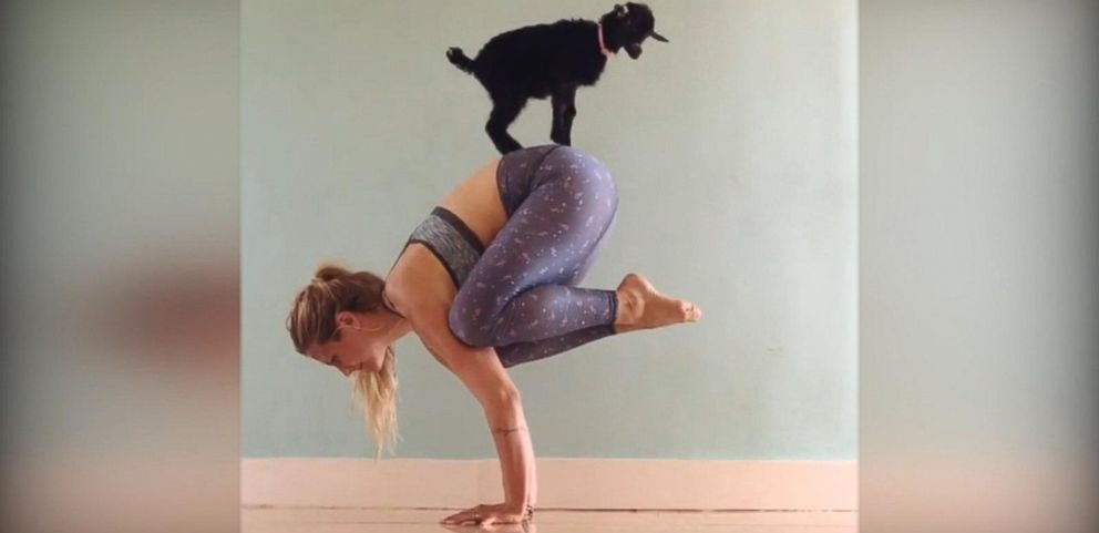 VIDEO: Goat Named Penny Lane Is Girls Greatest Yoga Partner
