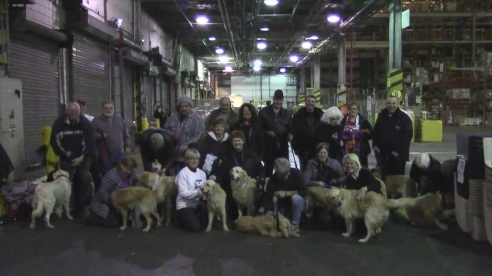 Charity Flies Stray Golden Retrievers From Turkey to Canada to Find
