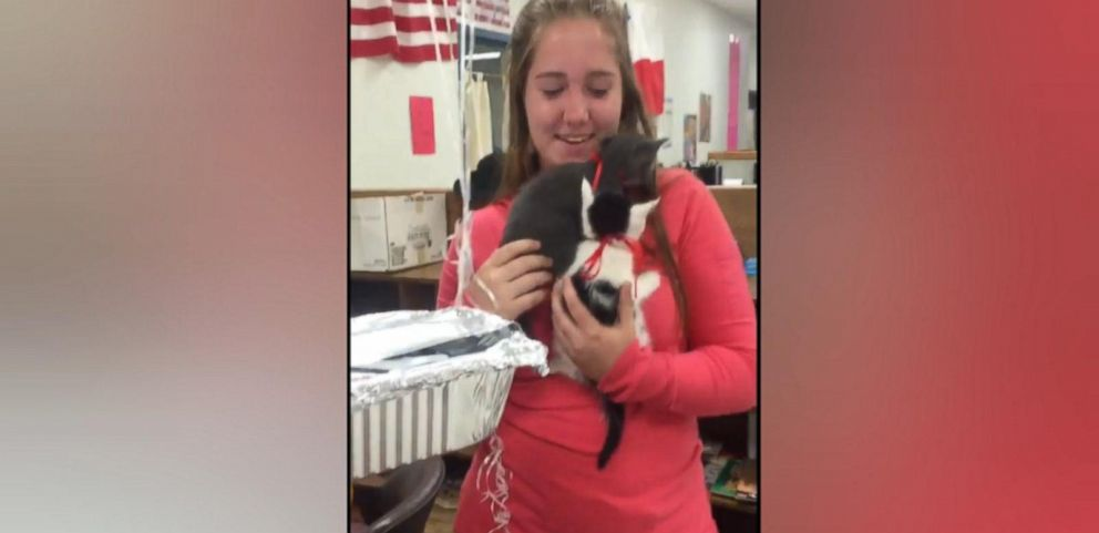 VIDEO: Students Surprised Teacher Whose Cat Passed Away With Kittens