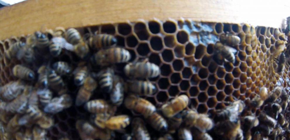 VIDEO: Killer Bees Swarm California Town