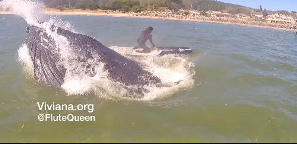 VIDEO: Whale Bumps Into Flute-Playing Paddleboarder