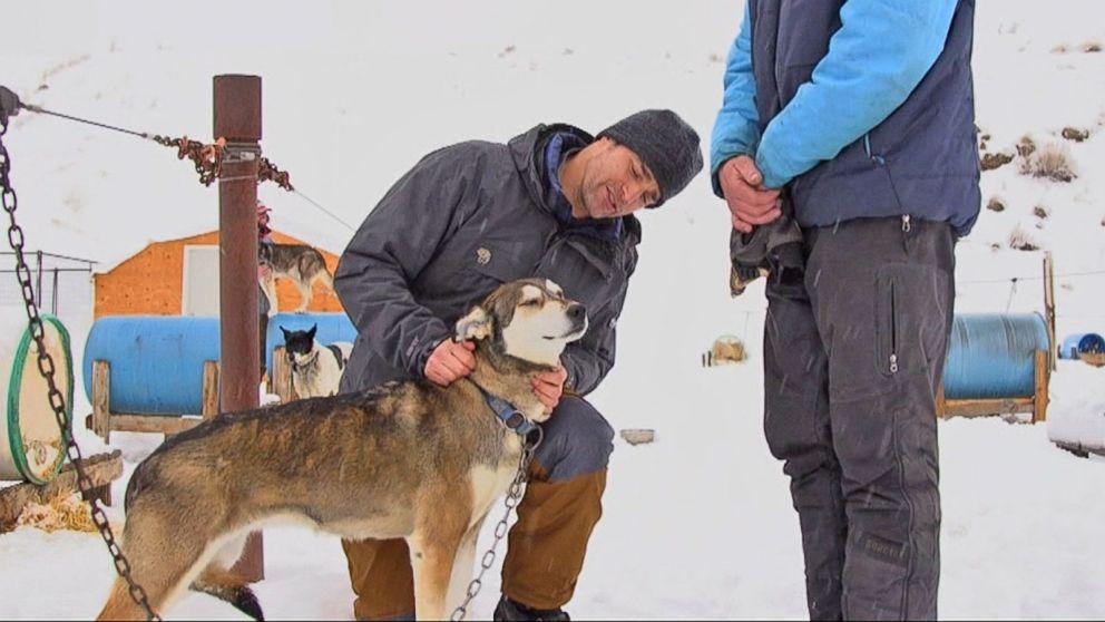 dog sledding video - 992×558