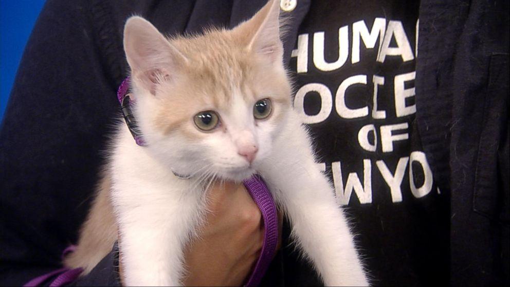 PetSmart's national pet-adoption weekend