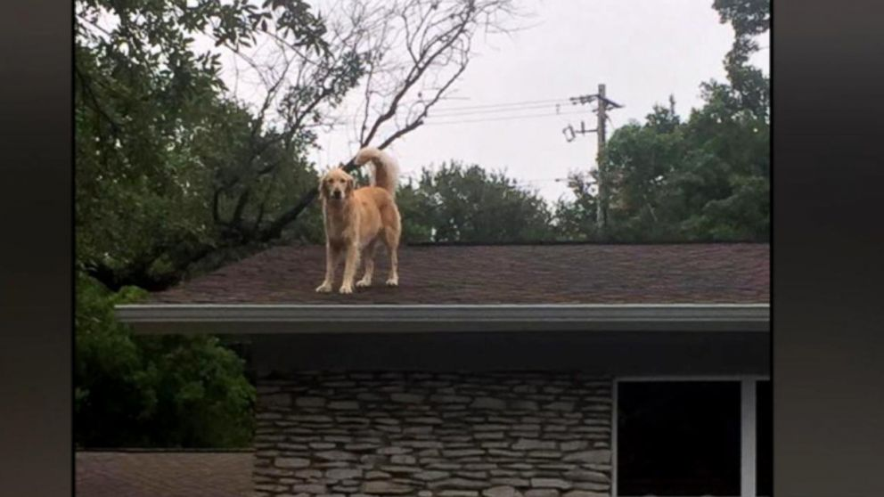 Dog loves hanging out on owner's roof