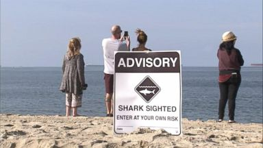 Kayaker attacked by great white shark Video - ABC News