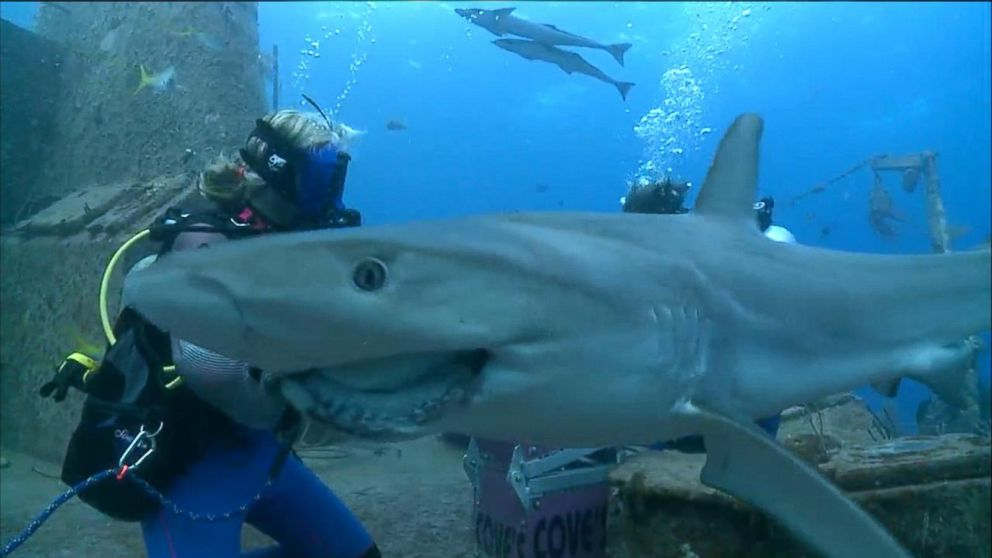 swimming sharks experience ginger zee s shark dive live in  buffering