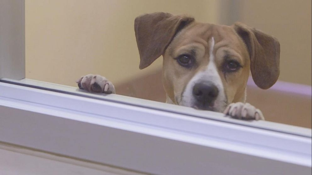 CDC to block imports of dogs from Egypt, citing rabies