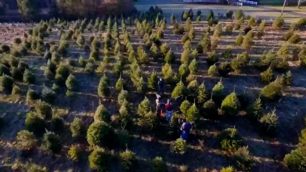 Christmas Tree Shortage.Christmas Tree Shortage May Drive Up The Price Of Your Tree