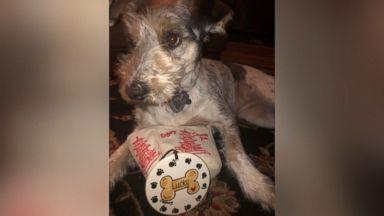 now playing trash collectors surprise neighborhood dog with christmas gift