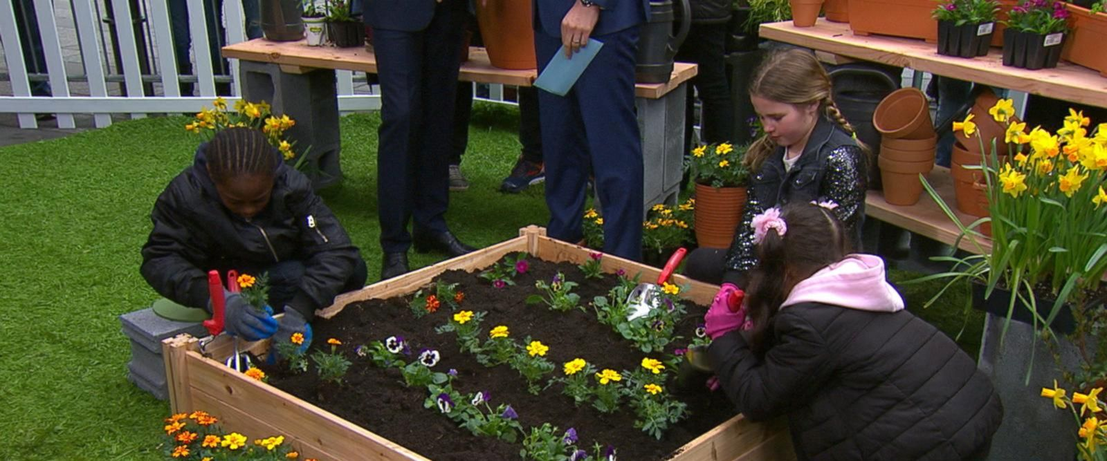 VIDEO: SAP pledges to plant 5 million trees by 2025 on 'GMA'