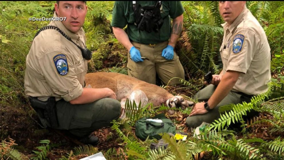 1 person killed, 1 injured in mountain lion attack in Washington state