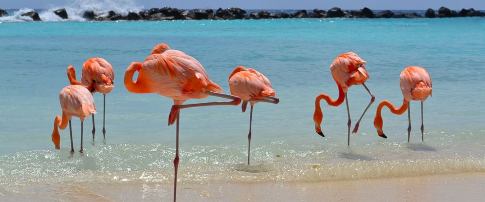 VIDEO: This resort is really into flamingos and now were really into this resort