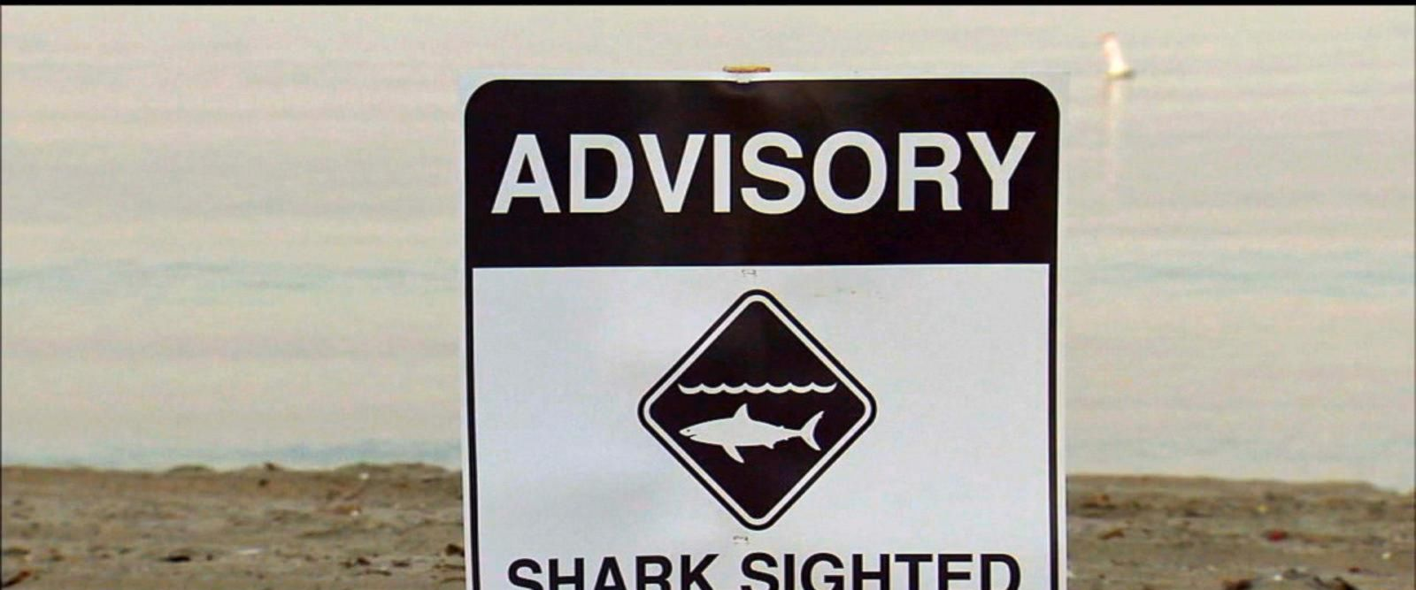 VIDEO: Officials issue shark warning as sightings rise