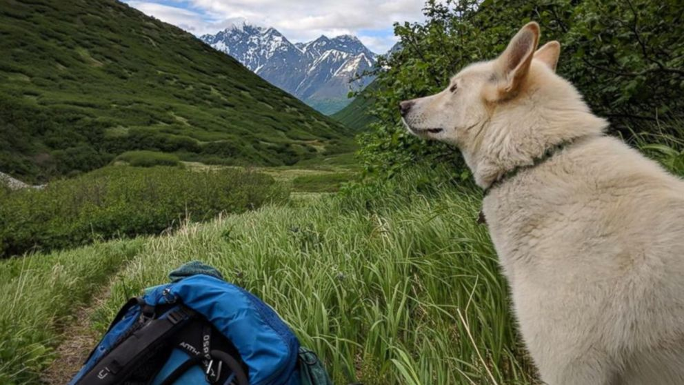 VIDEO: Deaf, injured hiker credits survival with dog that appeared out of nowhere