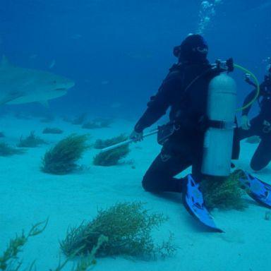 Stolen shark heads home to Texas aquarium | GMA