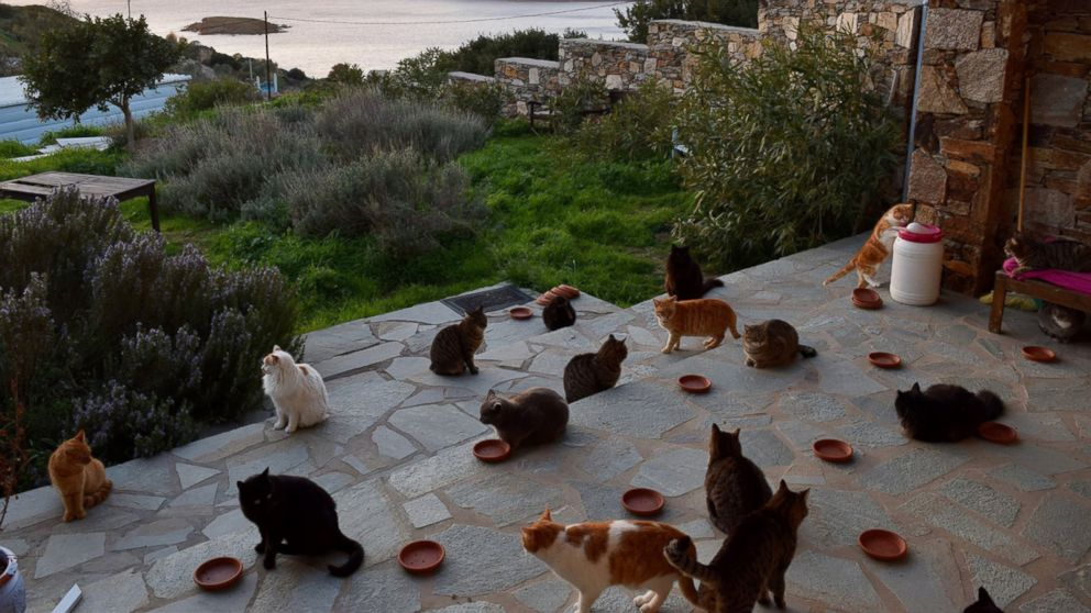 Job post for living at cat sanctuary on Greek island flooded
