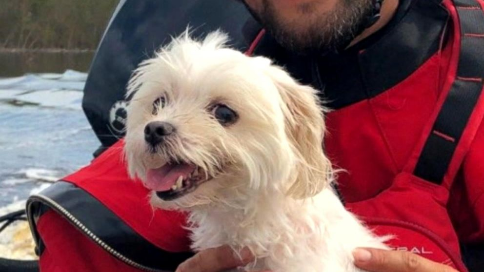 Dog Saved After Trapped In Florence Floodwaters