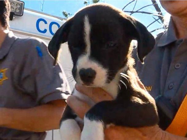 WATCH:  Rescues underway for animals caught in Michael's destruction