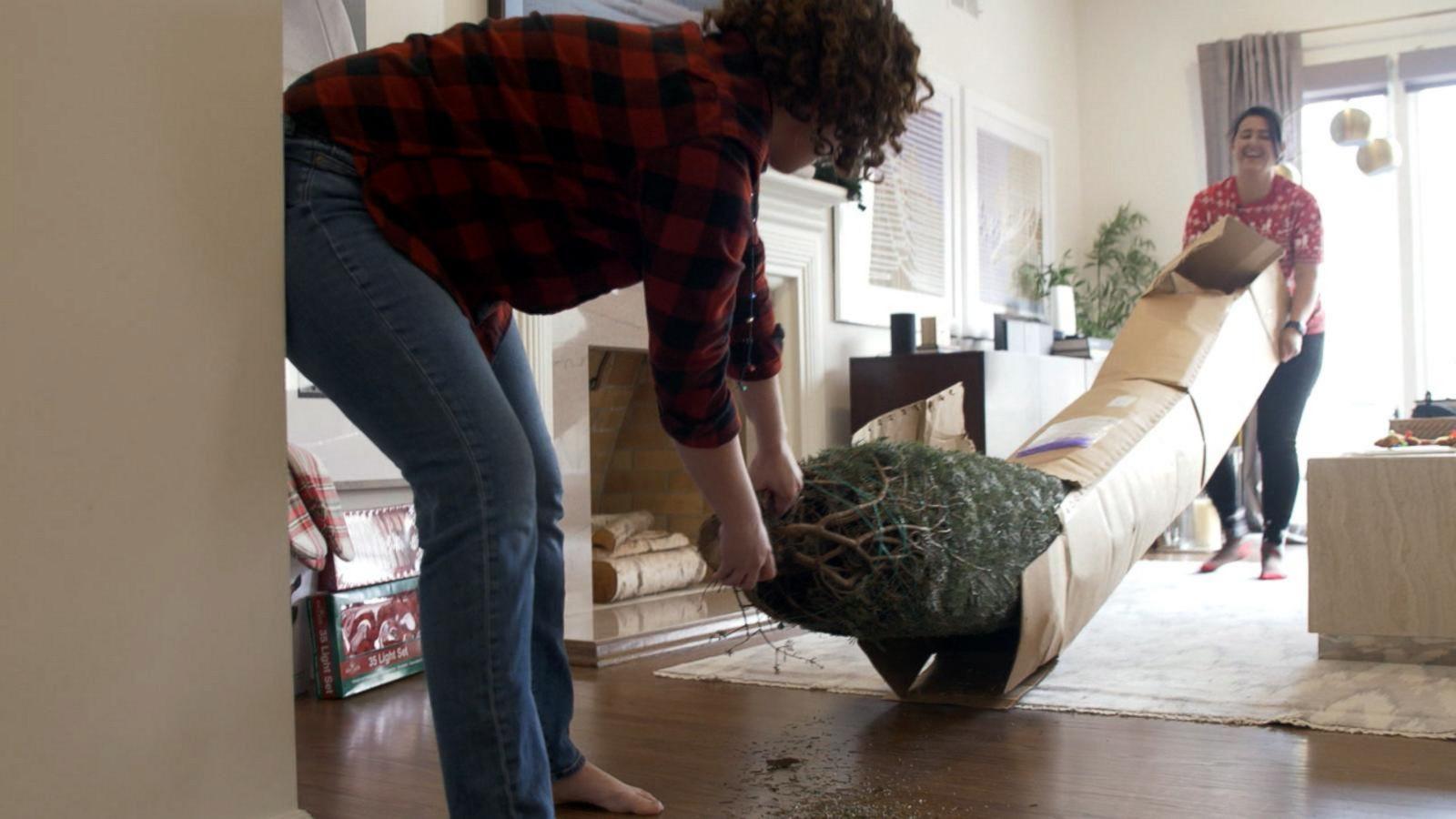 full-sized Christmas trees