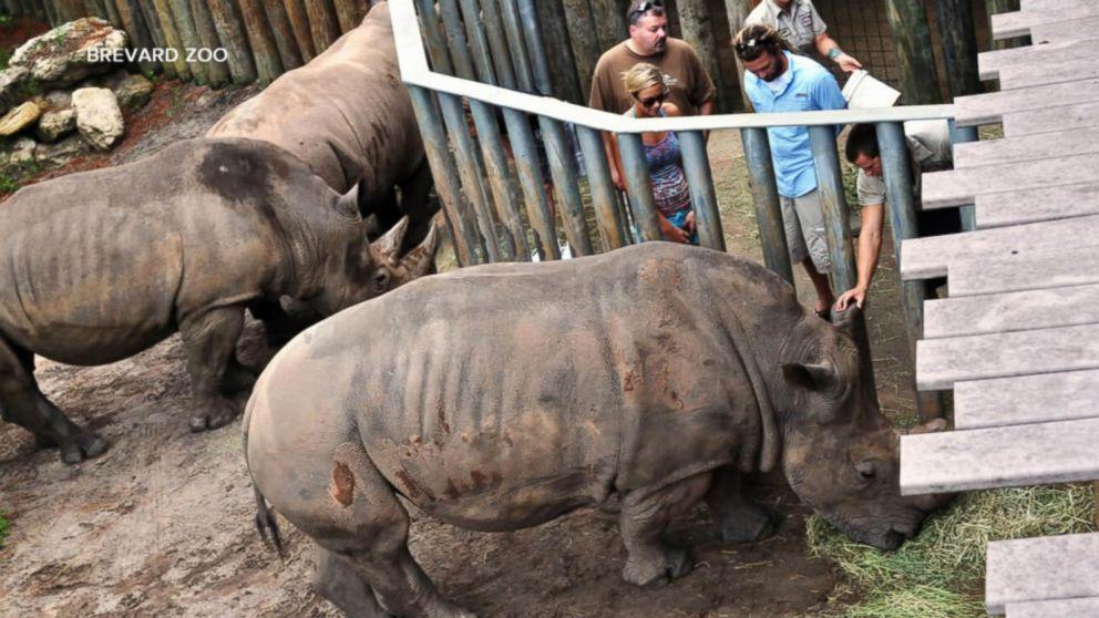 Image result for child injured rhino enclosure florida