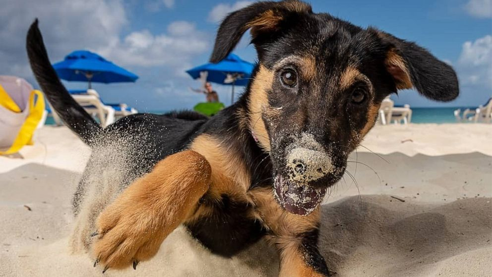 Take a potcake to the beach or adopt a pup at this animal rescue in paradise