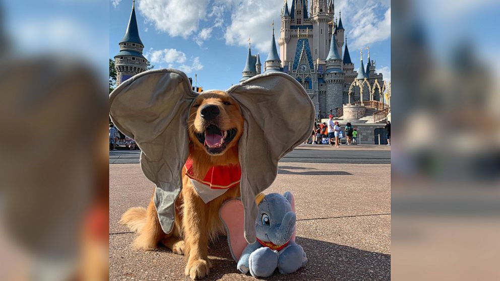 This service dog just took the cutest trip to Disney World