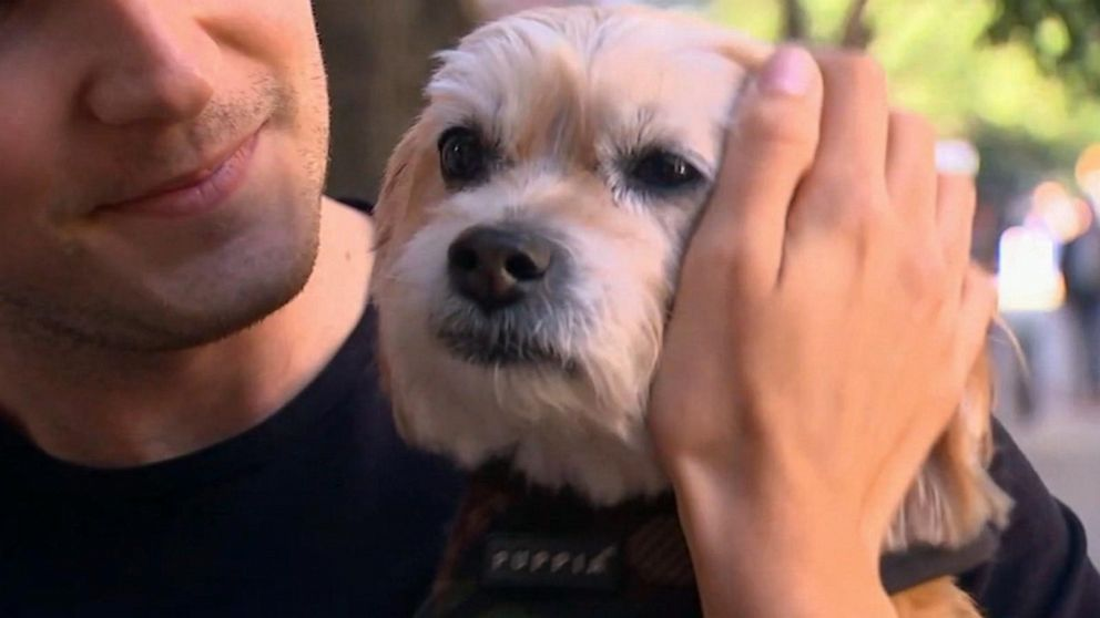 Hollywood actress helps in the case of a missing dog stolen by dog walker