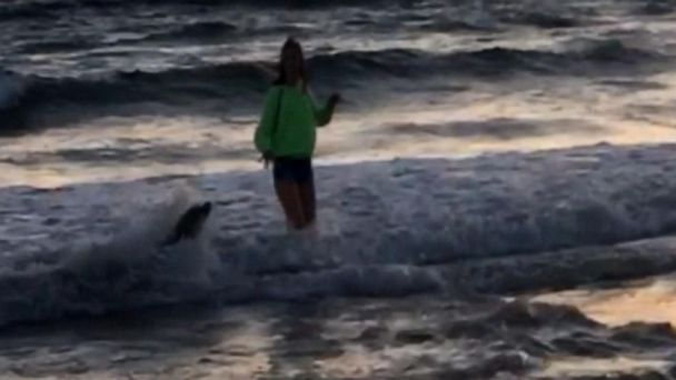 13-year-old bitten by sea lion at California beach