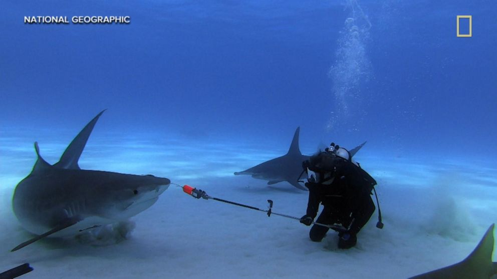 VIDEO: Meet 2 scientists trying to forecast shark attacks