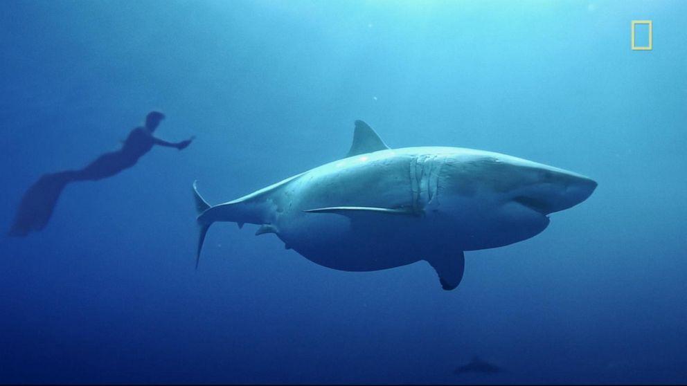 shark week 2020 - photo #18