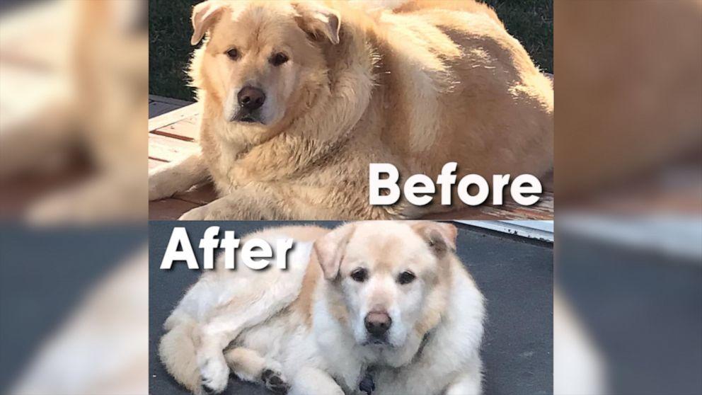 puppy pierde in greutate