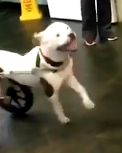 This dog ran with her wheelchair for the first time and living her best life