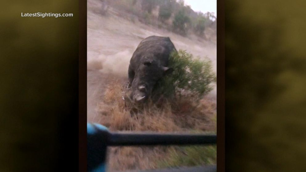 Tourist recalls being chased by a white rhino on South African safari